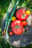 Fresh mix vegetables in sunny day Royalty Free Stock Photo