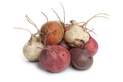 Fresh mixed color beets. On white background Royalty Free Stock Image