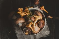 Fresh mixed forest mushrooms on the wooden black table Royalty Free Stock Photo