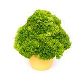 Fresh mixed green salad Royalty Free Stock Photography