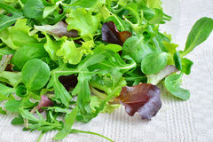 Fresh mixed greens leaf vegetables of arugula, mesclun, mache. Over kitchen towel royalty free stock images