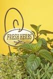Fresh Mixed Herbs Royalty Free Stock Photos