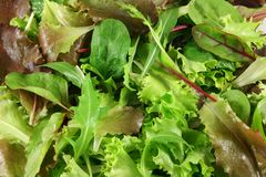 Fresh mixed lettuces, top view. Mixed lettuces closeup, very fresh Stock Photo