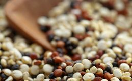 Fresh mixed quinoa. With a wooden scoop closeup Stock Images