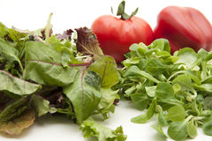 Fresh Mixed Salad Stock Photography