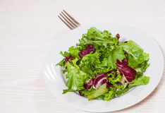 Fresh mixed salad leaves Royalty Free Stock Photo