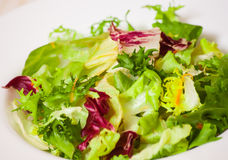 Fresh mixed salad leaves Royalty Free Stock Photography
