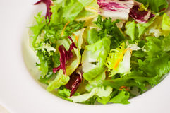 Fresh mixed salad leaves. On white plate stock image