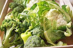 Fresh mixed vegetables. Agriculture-garden-vegetables stock image