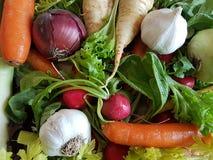Fresh mixed vegetables healthy foods carrots kohlrabi,. Turnip, salad, radish royalty free stock photo
