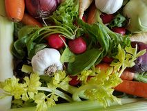 Fresh mixed vegetables healthy foods carrots kohlrabi,. Turnip, salad, radish royalty free stock image