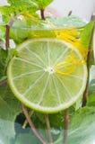 Fresh mojito Stock Images