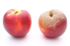 Fresh and moldy peach on white background Royalty Free Stock Photography