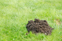 Fresh molehill on green meadow site in spring day Royalty Free Stock Photos