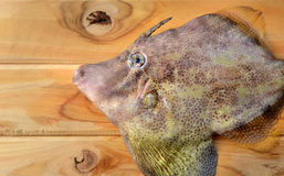 Fresh monacanthidae fish. Seafood fresh monacanthidae fish from market on wooden and photo in sunlight Stock Photography