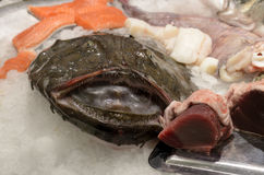 Fresh monkfish stock photography