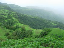 Fresh Monsoon Landscape Royalty Free Stock Photo