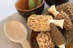 Fresh morel mushrooms Stock Images