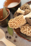Fresh morel mushrooms Stock Photography