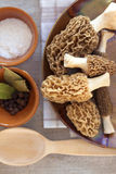 Fresh morel mushrooms Stock Image