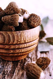 Fresh morels. Fresh morel mushrooms on a blue plate Royalty Free Stock Photo