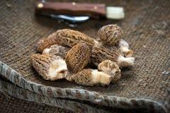 Fresh Morels Mushrooms. Fresh Morelle Mushrooms on rustic background Stock Photo