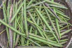 Fresh Moringa Stock Photos