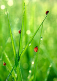 Fresh morning dew Royalty Free Stock Photo