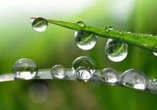 Fresh morning dew Stock Photos