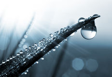 Fresh morning dew drops Royalty Free Stock Images