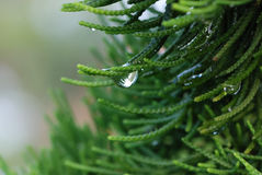 Fresh morning dew drops close up Stock Photo