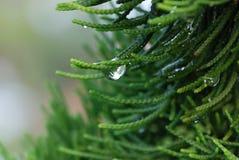 Fresh morning dew drops close up Stock Photo