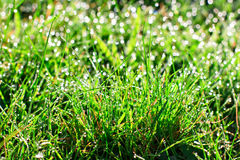 Fresh morning dew in grass Stock Photos