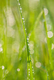 Fresh morning dew on spring grass. Royalty Free Stock Images