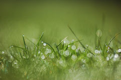 Fresh morning dew on spring grass Royalty Free Stock Photos