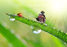 Fresh morning dew Stock Images