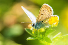 Fresh morning dew on a spring grass and butterfly, natural backg Stock Photo