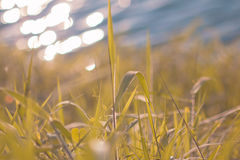 Fresh morning dew on a spring grass in early morning. Sunny day. Concept. Natural background Royalty Free Stock Image