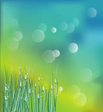 Fresh morning. Dew on spring grass in sunrise, natural background Royalty Free Stock Image