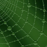 Fresh morning dewdrops on the spiderweb. Morning dew on the cobwebs with a green background Stock Photos