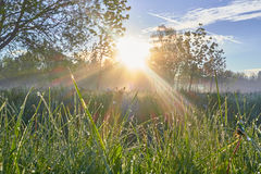 Fresh morning with sun rays and grass dew dawn trees Stock Photo