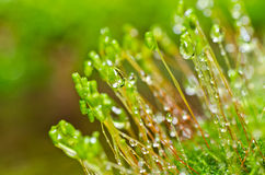 Fresh moss in green nature Stock Photo