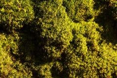 Fresh moss macro Stock Photography