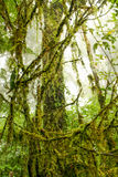 Fresh Moss. In the rain forest Royalty Free Stock Photography