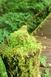Fresh Moss. In the rain forest Stock Photography