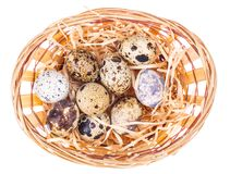 Fresh, motley quail eggs as symbol of the Easter holidays stock photography