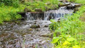 Fresh mountain stream with waterfall. Murmur of fresh mountain stream with a small waterfall in the grass stock footage