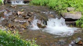Fresh mountain stream with waterfall. Murmur of fresh mountain stream with a small waterfall in the grass stock video footage