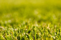 Fresh mowed grass Stock Image