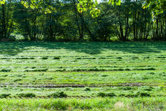 Fresh mowed grass in a meadow Royalty Free Stock Photography